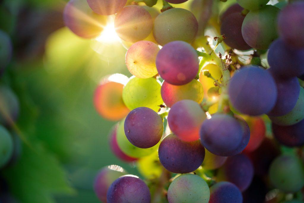 Blickfang des Monats: Weintrauben